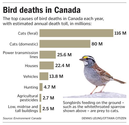 Causes-of-Bird-Deaths