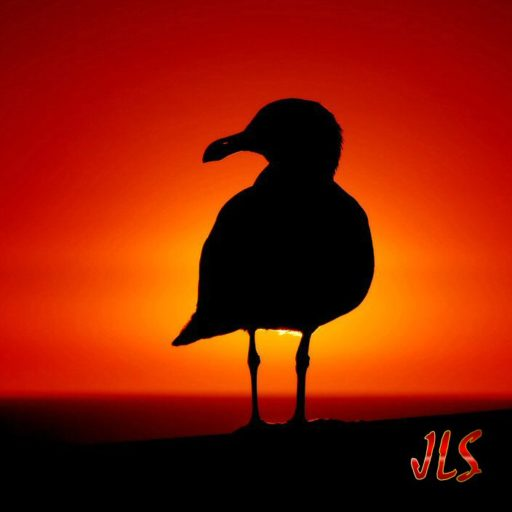 cropped-seagull_at_sunset_by_robgbob-1-1.jpg