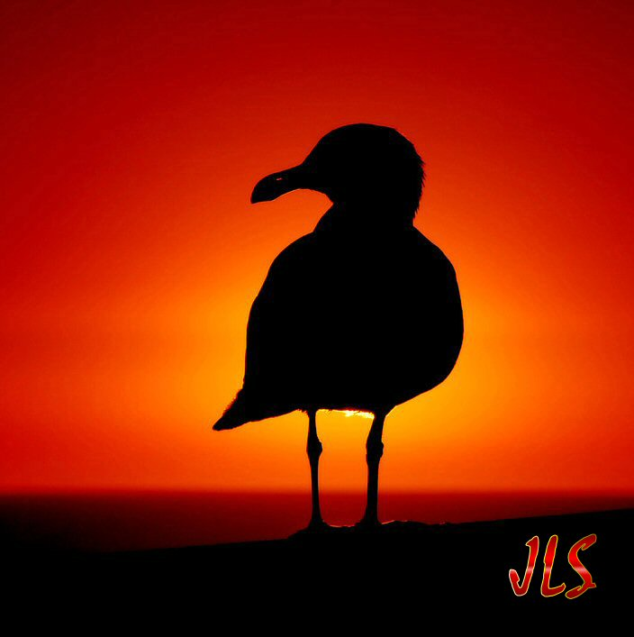 seagull_at_sunset_by_robgbob-1